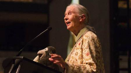 Earth Day, 2018: Five fascinating videos of Jane Goodall whom Google Doodle honoured