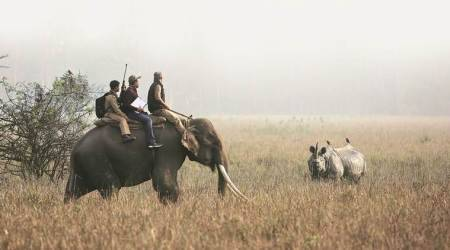 How poaching was curbed in Kaziranga, and what it would take to step up conservation