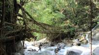 Bridges Across Forever: Crowdfunding Meghalaya's living-root bridges