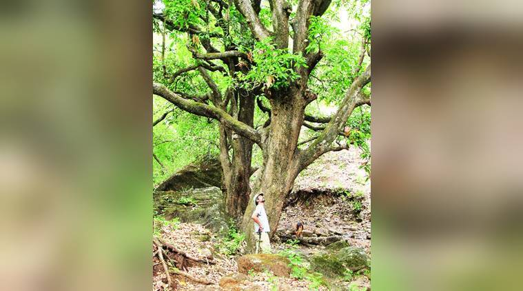 studying trees, understanding nature, relation between trees and humans, walking through forest, studying plants, indian express, indian express news