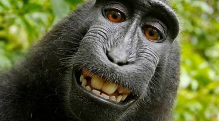 copyright fight over monkey selfie