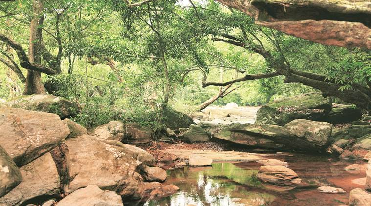 Biome, living around plants, living with flora and fauna, common characteristics in plants and humans, travel, places to travel, indian express, indian express news