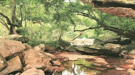Maharashtra will try digital route to review lakhs of forest rights claims