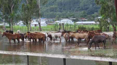 Manipur: Why the world's original polo pony isdying