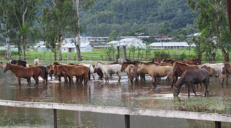 Manipur, Manipur's polo ponies, Imphal, Polo