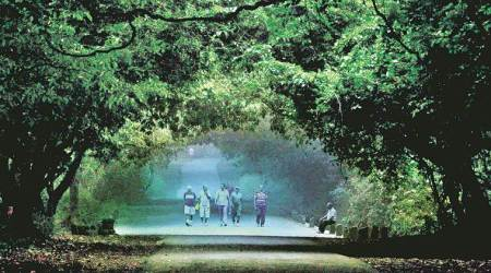Study by IIT-Bombay, NGO Sanjay Gandhi park to gauge its contribution to Mumbai's ecosystem