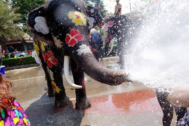 Songkran, Songkran 2018, Songkran festival, Songkran thailand new year, Songkran buddhist new year, water water-splashing Songkran festival with elephants, indian express