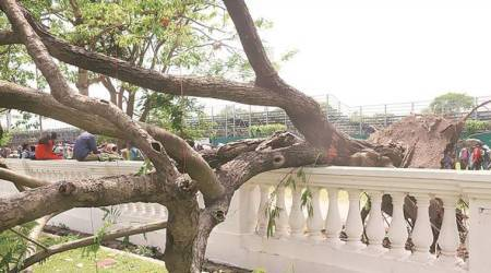 After storm, KMC to plant deep-rooted trees; activists blame poor urban planning