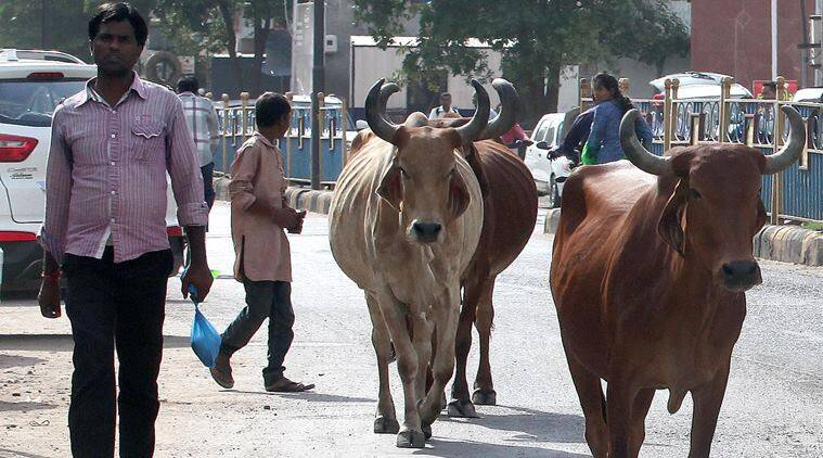 delhi police constable suspended, delhi police constable sells cattle, delhi policeman suspended, constable suspended for selling cattle