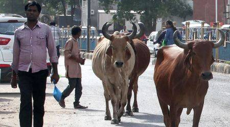 Foot and mouth disease control programme satisfactory in Maharashtra: OIE team