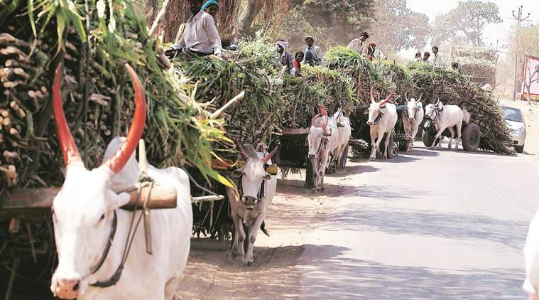 Maharashtra again: For water-intensive crops, farmers need new OKs