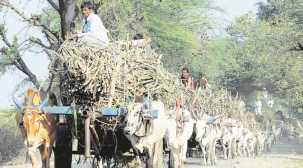 Maharashtra: Sugar factories federation writes to Centre, contests order