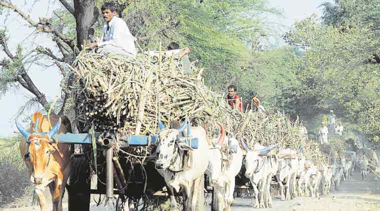 Labour trouble looms large over early sugarcane season