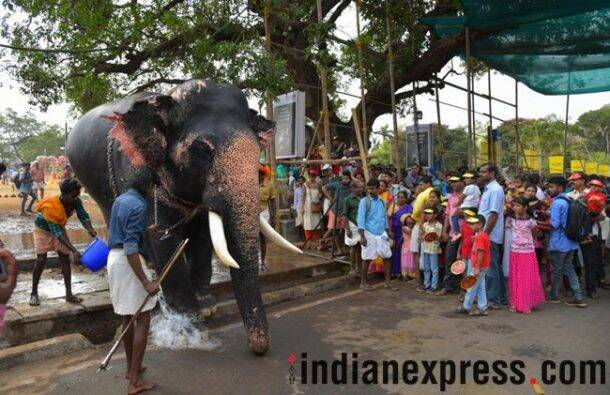thrissur pooram, thrissur pooram 2018, thrissur pooram celebrations, thrissur pooram festival, thrissur pooram kerala, thrissur pooram celebrations kerala, thrissur pooram in malayalam, thrissur pooram elephants, indian express, indian express news