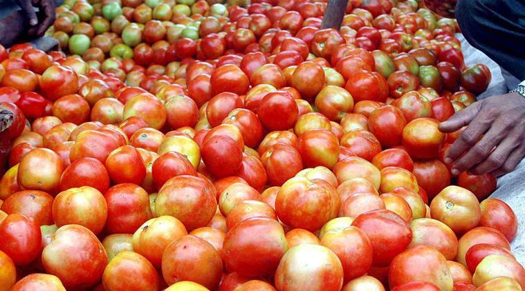 nashik tomato farmers, nashik tomato growers, maharashtra tomato prices, indian express, latest news