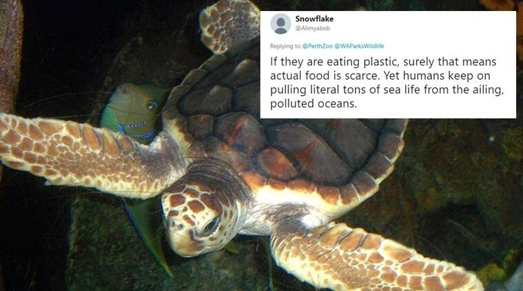 turtles poop plastic, baby turtle poops plastic after swallowing it in ocean, plastics in ocean, disposing plastics in the water, Indian Express, Indian Express News