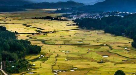 Kiwi from Arunachal Pradesh's Ziro Valley now going global
