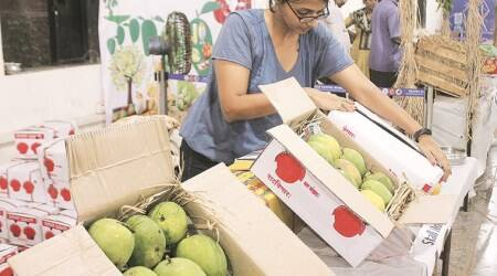 'Sturdy' Kesar cornering a lion's share of export markets over Alphonso