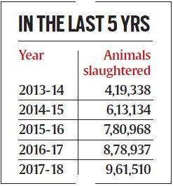 Three years after beef ban, slaughter of buffaloes at an all-time high in Maharashtra