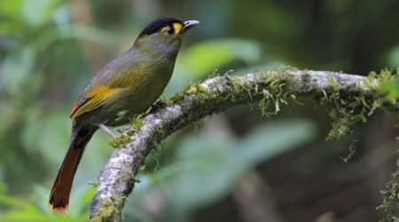 How Arunachal Pradesh's Bugun tribe won a national conservationaward