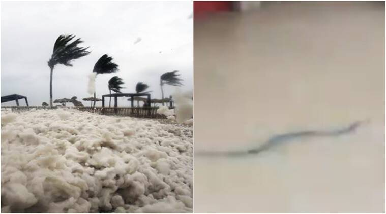 cyclone mekunu, floods in mangalore, mekunu in mangalore, cyclone floods in mangalore, mekunu in oman, mekunu videos, mekunu cyclone viral videos, mekunu viral videos social media, Indian express, Indian express news