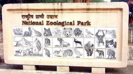 delhi zoo, delhi zoo timings, delhi zoo animals, new animals delhi zoo, zoo animals, animals in delhi zoo, india news, delhi news, indian express