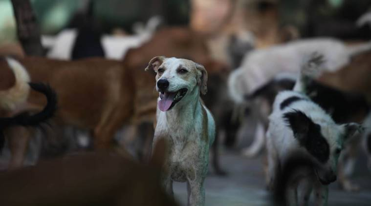 IVRI: Human-animal conflicts due to hunger behind Sitapur dog attacks