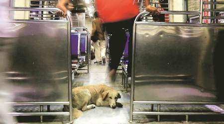 Mumbai: As dog bite complaints increase, Vasai Virar may get second sterilisation centre