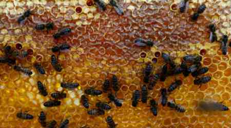 Flexible, honey-comb like 3D material could clear air pollution:Study