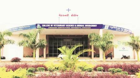 Gujarat: Activist objects to university auctioning poultry totraders