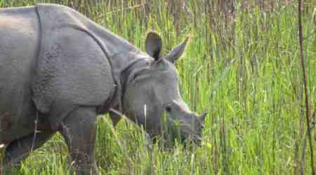 Kaziranga conservation activist faces threat to life