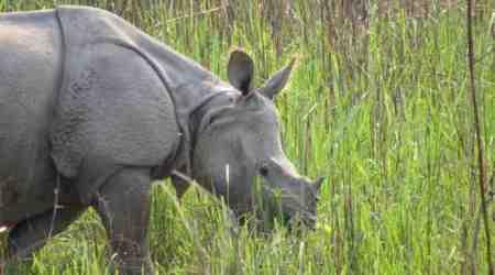 Kaziranga conservation activist faces threat tolife