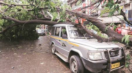 On Friday, a high-intensity squall accompanied by rain threw life out of gear in Kolkata after several trees were uprooted and cables were snapped. (Express photo)