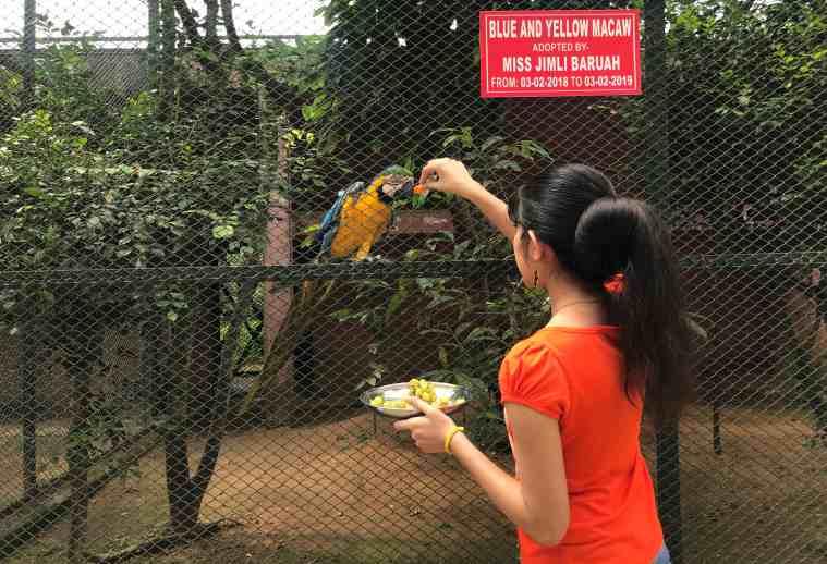 Macaw, Blue and Yellow Macaw. Assam State Zoo Macaw, Guwahati zoo adoption, bird
