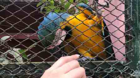 In the Guwahati Zoo, a talking bird revives its defunct animal adoption scheme