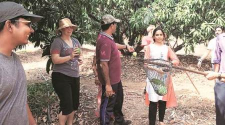 Maharashtra: Mango tasting farms soar high on popularity list of travellers