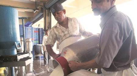 Maharashtra: Solution to state's milk sector crisis may be found in neighbouringstate