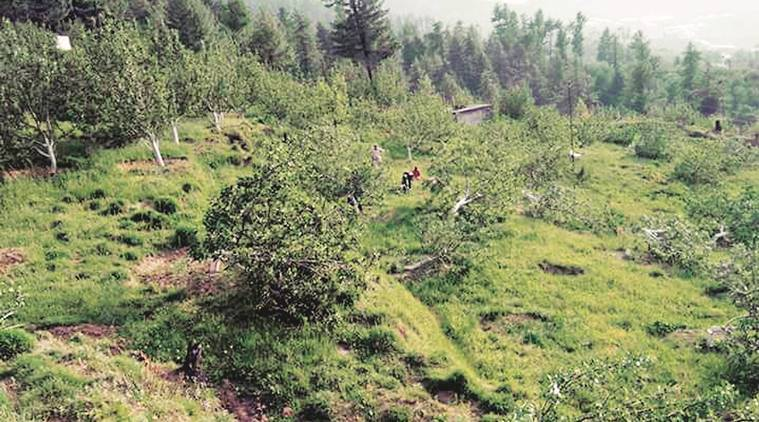 Himachal Pradesh: Three days before HC deadline, many apple orchards face crackdown