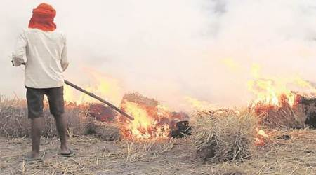 Haryana: 12 per cent spike in stubble burning cases this season