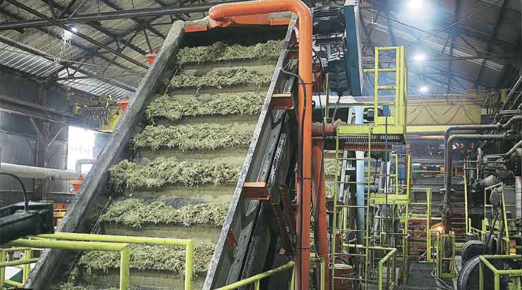Haryana: Private mills fail to clear farmers' dues, cite sugar price fall to seek govt assistance