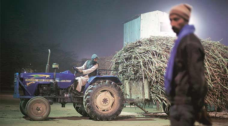 Sugar industry: Liquor makers get a free ride as molasses prices crash