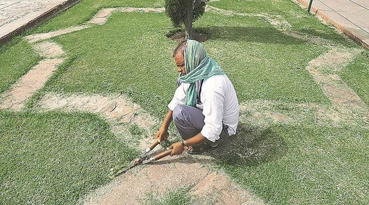 Horticulture: 53 |41 ASI members (experts and gardeners) and 12 labourers. Experts decide the design for Taj's gardens and select the flora for the area. (Express photo/Abhinav Saha)