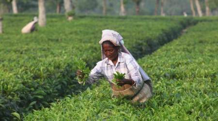 West Bengal: On day two of strike, tea garden workers hold rallies, activists speak out in their support