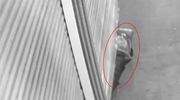thief jellwey store, thief gets under shutter to rob, metal shutter thief, thief under shutter, thief caught on camera, robber caught on camera, cctv footage, viral video, indian express, indian express news