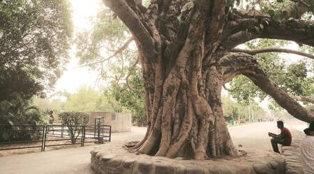 Preservation in mind, Department of Forests and Wildlife identifies 31 'heritage' trees across city