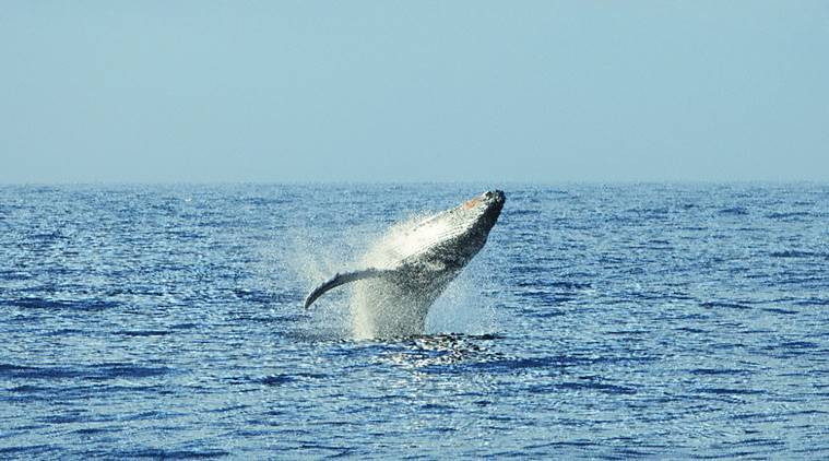 Japan proposes end to commercial whaling ban, faces pushback