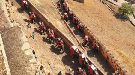 Phase out jumbo rides at Amer fort: Animal body to Rajgovt