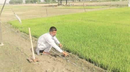 Maharashtra: Kharif sowing in state at 97 per cent