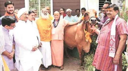 In MP, swami with Cabinet rank proposes cow ministry to rid it of 'animal' tag