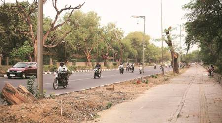 Delhi: To make way for govt colonies, south Delhi set to lose its trees